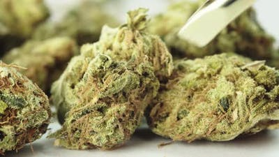 Marijuana. Cannabis. Hemp. Close-up. Weed
