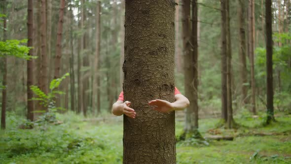 Man with Strong Hands Hugs a Tree Trunk Nature Conservation Environmental Protection