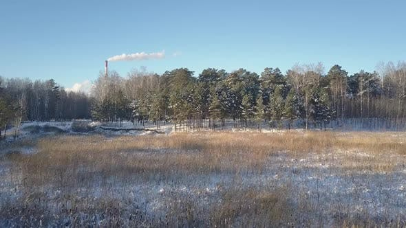Thumbnail for Aerial Motion Above Glade Covered with Snow To Old Pines