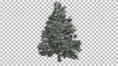 Pine V4