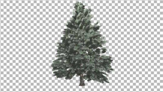 Cover Image for Pine V4