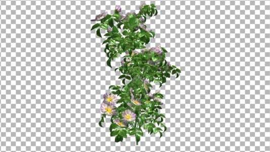 Cover Image for Flowers V 1