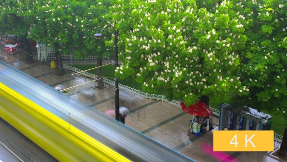 Thumbnail for Rain on the Street and Flowering Chestnuts