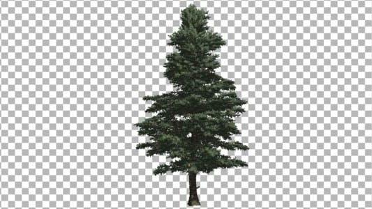 Cover Image for Pine V5