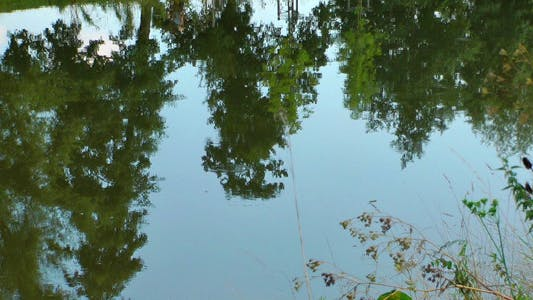 Thumbnail for Tree Reflection on the River 3