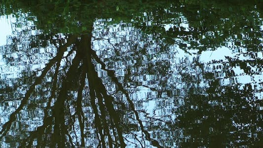 Thumbnail for Tree Reflection on the River 6