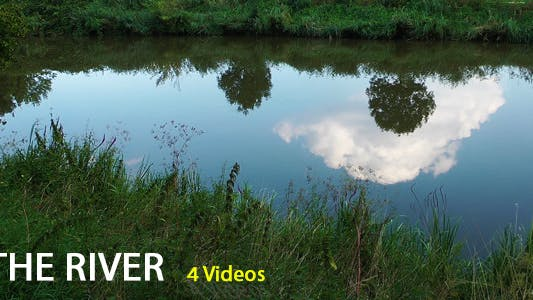 Thumbnail for The River and Tree Reflection on the River