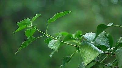 Wet Branch