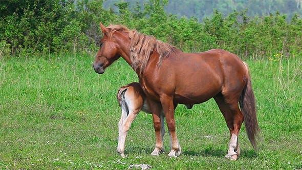 Thumbnail for Horse Family