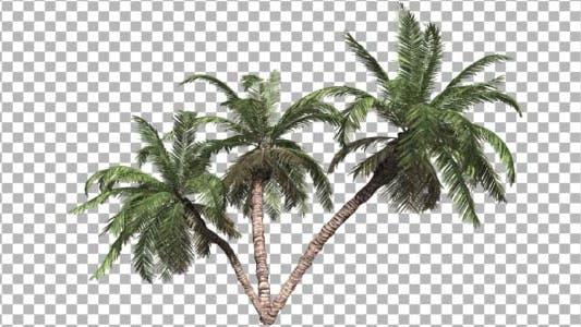 Thumbnail for Palms V 3