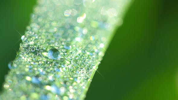 Thumbnail for Morning Dew on the Grass