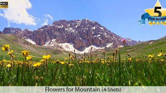 Cover Image for Flowers for Mountain