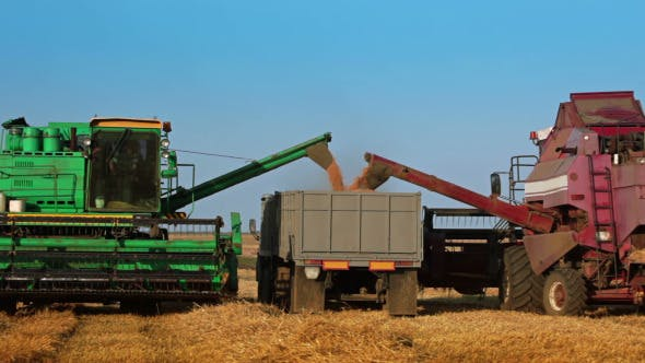 Thumbnail for Two Harvesters are Unloading Grain to the Truck