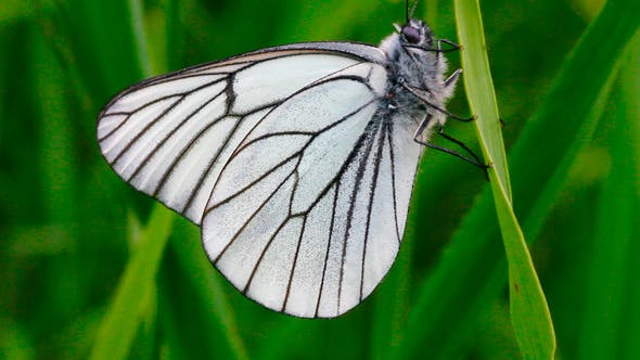 Cover Image for White Butterfly On Leaf Macro