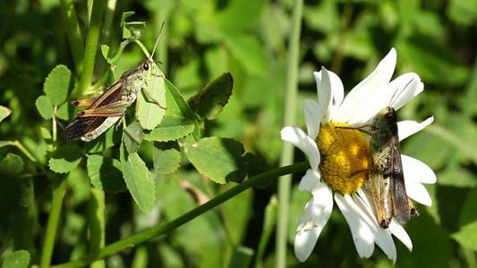 Thumbnail for Grasshopper Meeting