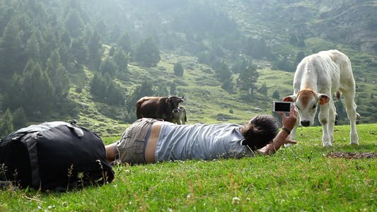 Thumbnail for Recording A Calf With The Phone