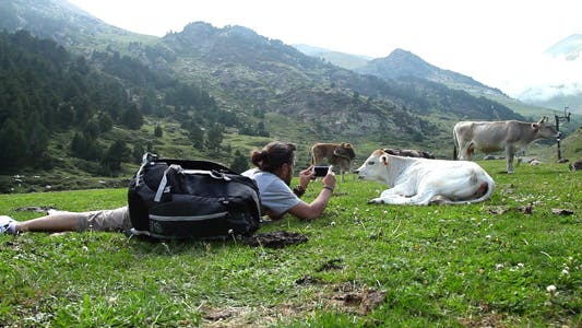 Thumbnail for Taking Photos To A Calf With A Phone