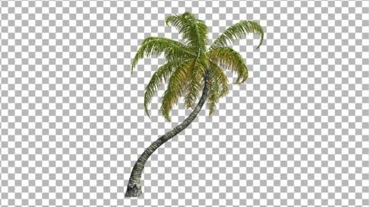 Cover Image for Palm V 5
