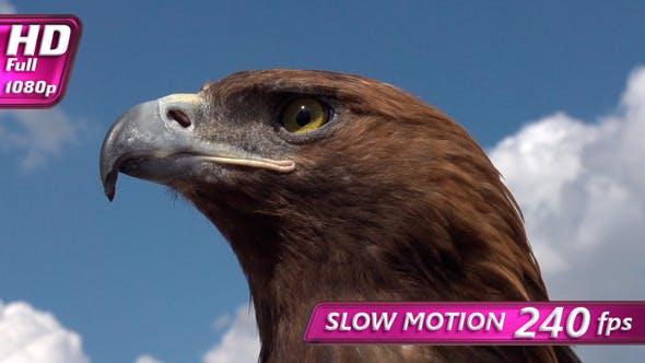 Bird of Prey in Profile