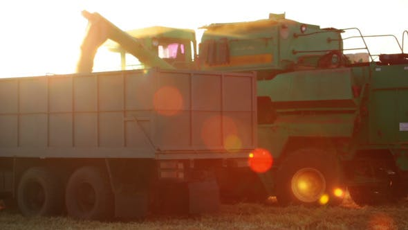 Thumbnail for Harvester is Unloading Grain to the Truck and Lens