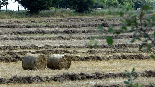 Thumbnail for Bales Hay in Farm Field 3