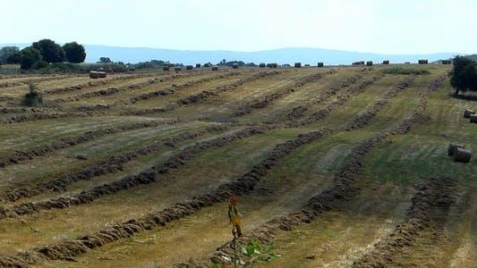 Bales Hay in Farm Field 4