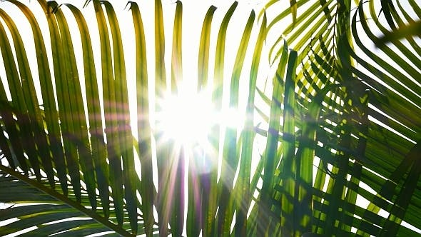 Sunbeams Through Palm Leaves