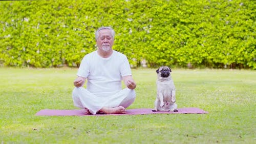 Healthy Asian Elderly man with white hairs doing yoga lotus pose for meditation with dog pug breed