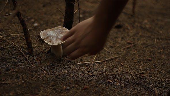 Thumbnail for Sichere Pilze sammeln