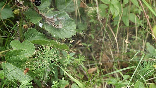 Spinne Angriffe Beute