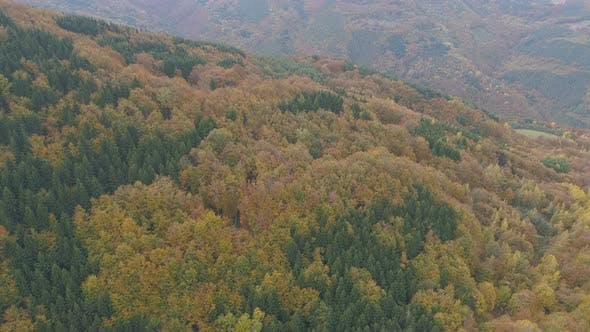 Thumbnail for Expanse of Pines in Autumn on the Balkan Peninsula