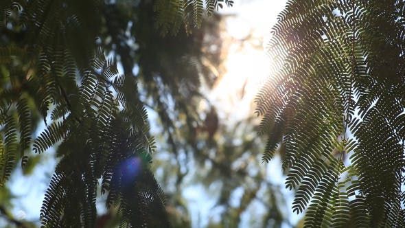 Thumbnail for Leaves Of Trees In The Sun (Pack of 5)