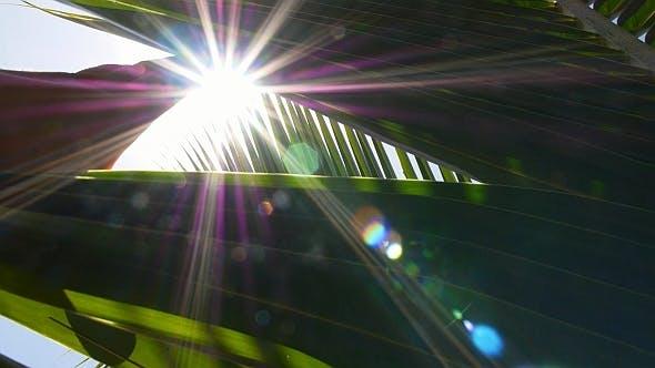 Thumbnail for Hand Reaching Sun through Palm Leaves