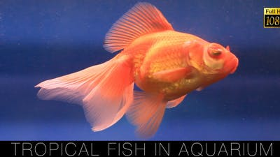 Tropical Fish In Aquarium 3