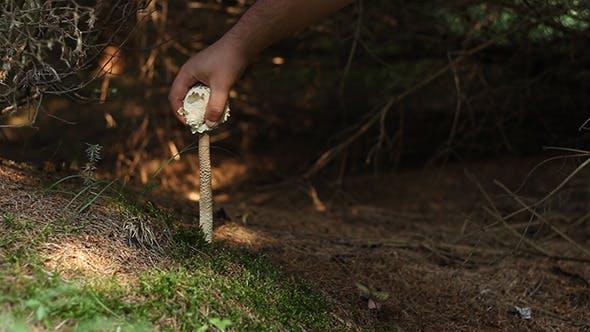 Thumbnail for Mushroom Hunting
