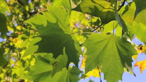 Blätter 30
