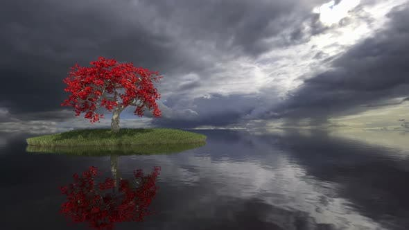 Tree Reflecting In a Lake