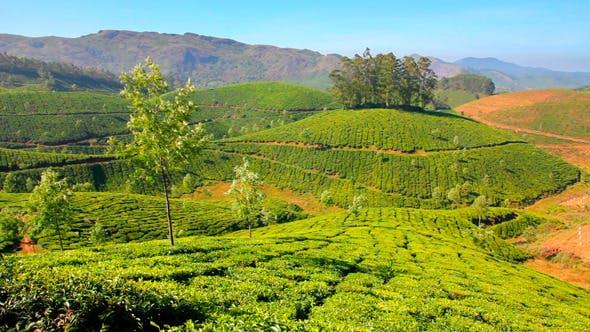 Thumbnail for Mountain Tea Plantation In Munnar 1