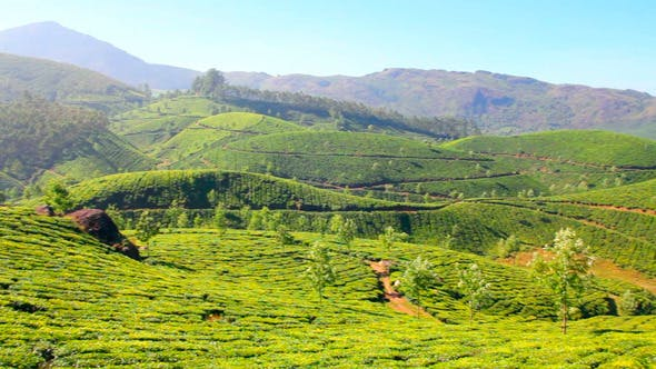 Thumbnail for Mountain Tea Plantation In Munnar 2