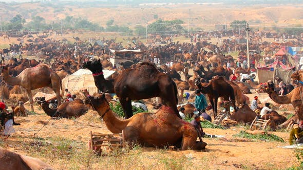 Thumbnail for Pushkar Camel Fair
