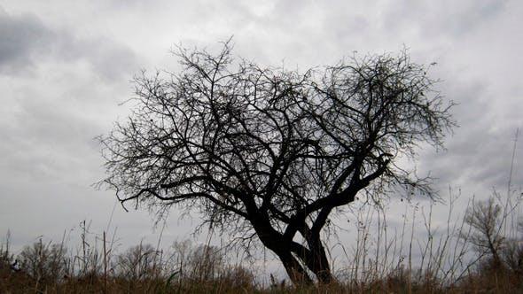 Thumbnail for Dry Tree Under Moody Sky