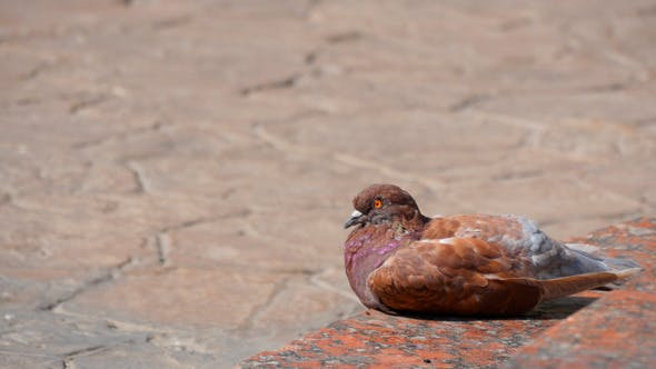 Pigeons In The City 1