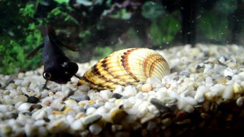 Black Gold Fish and Shellfish