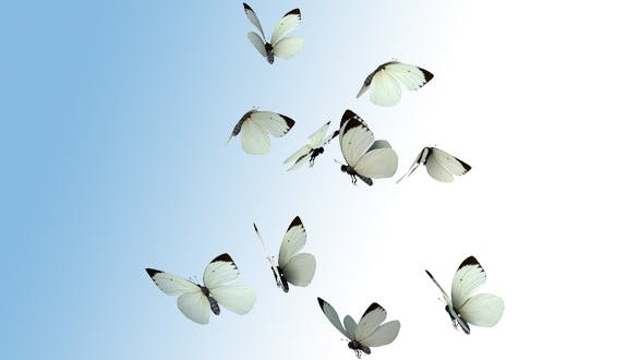 Thumbnail for Realistic White Butterflies