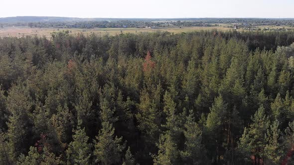 Thumbnail for Aerial View on Pine Forest with Fields. Wood Park with Green Trees