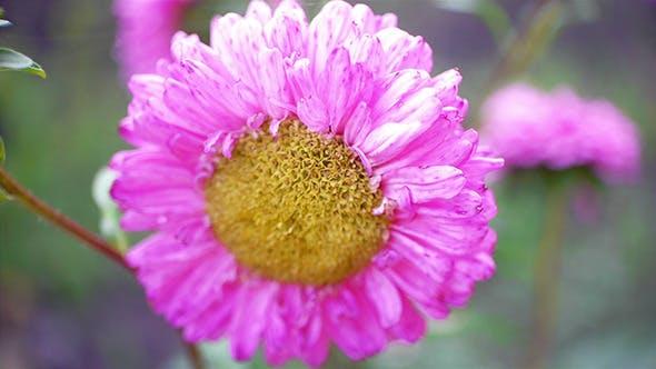 Thumbnail for Autumn Flower 2