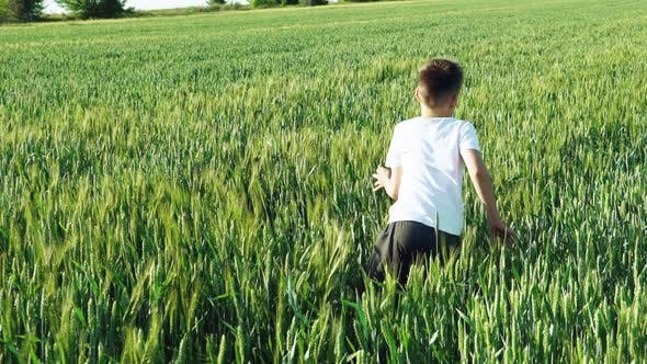 Thumbnail for Boy With his Back is Running Over the Wheat in the Field