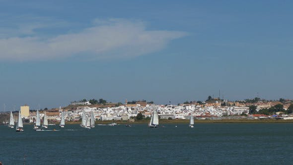 Thumbnail for Many Sailing Yachts Moving in the Bay 884