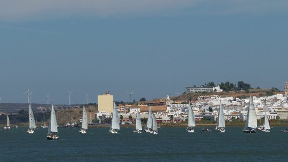 Thumbnail for Many Sailing Yachts Moving in the Bay 885