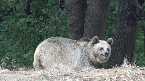 Anxious and Fearful Bear